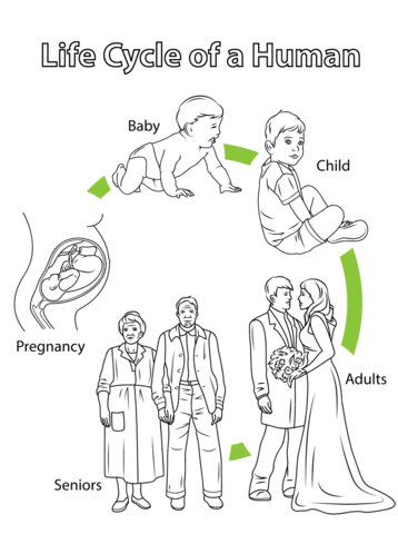 Life Cycle of a Human Coloring page from Biology category