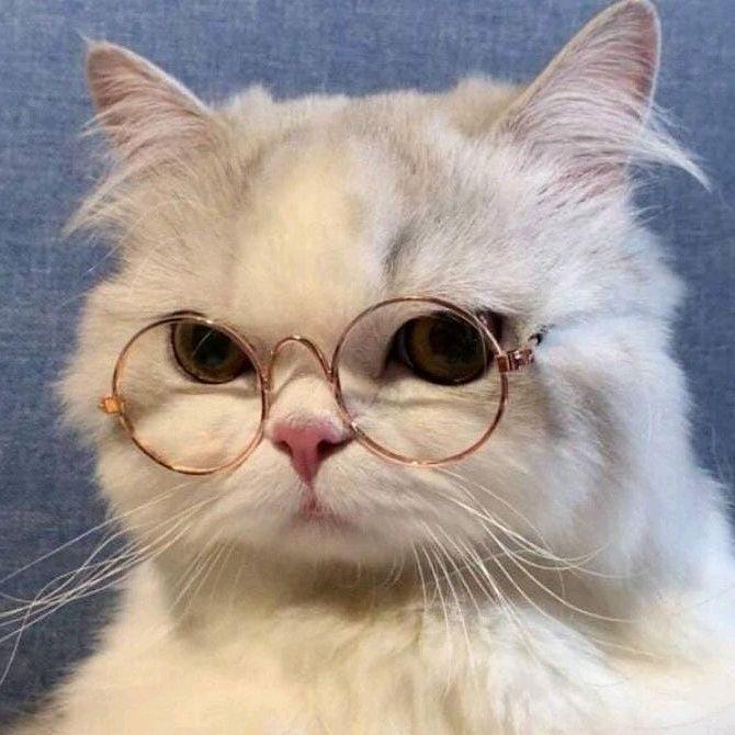 Pin By Benyapa Pinnok On Animals Cute Cat Costumes Cute Cat Wallpaper Cute Baby Cats