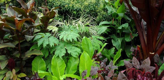 Love This Site On Tropicals They Identify The Plants And Provide Useful Information Good Work