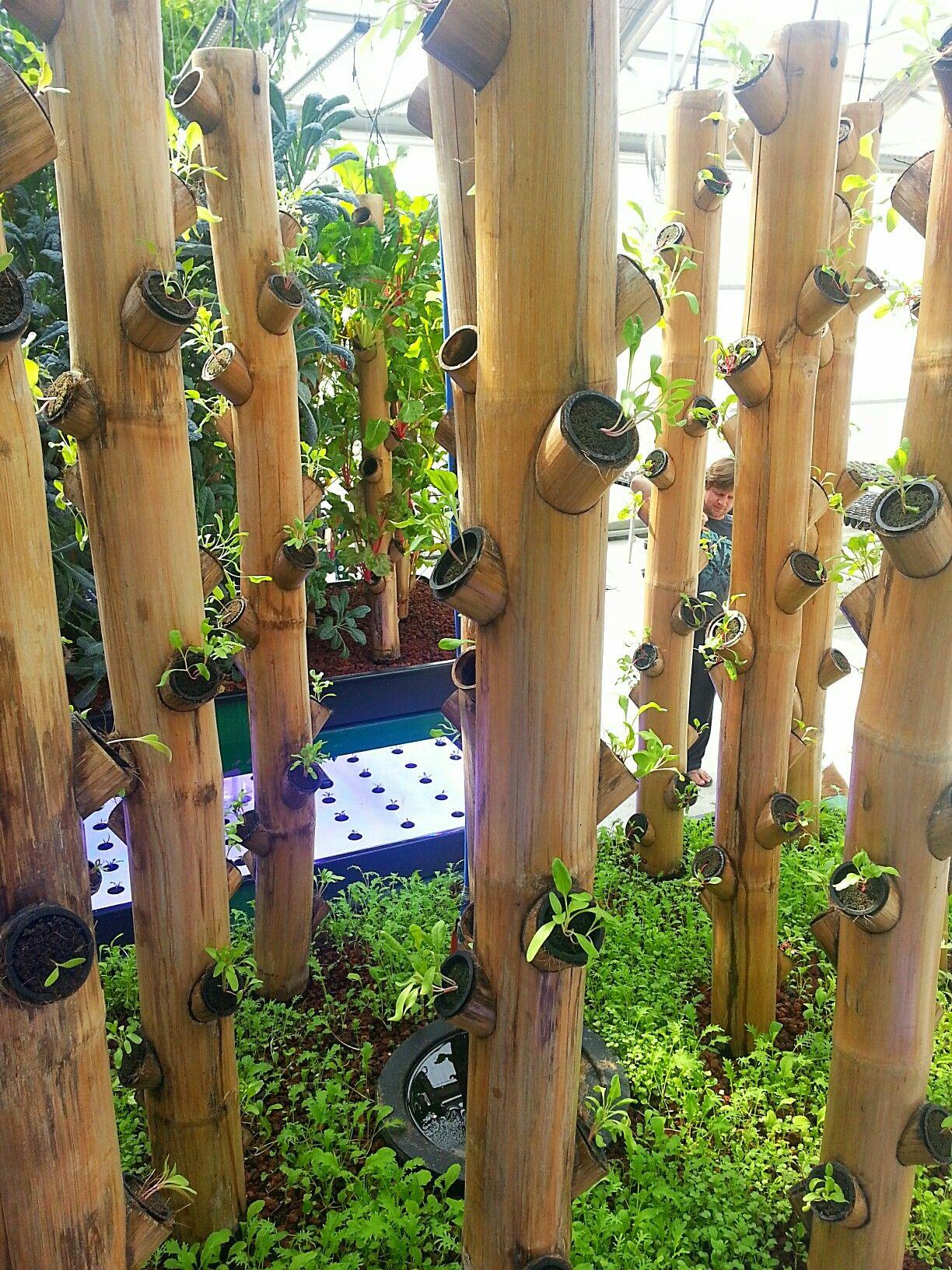 Newly Planted Bamboo Vertical Garden Vertical Garden Diy 400 x 300