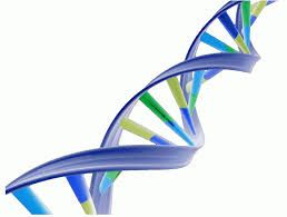 What's in the DNA?: The results are in! #genealogy www.lifeinthepastlane.org
