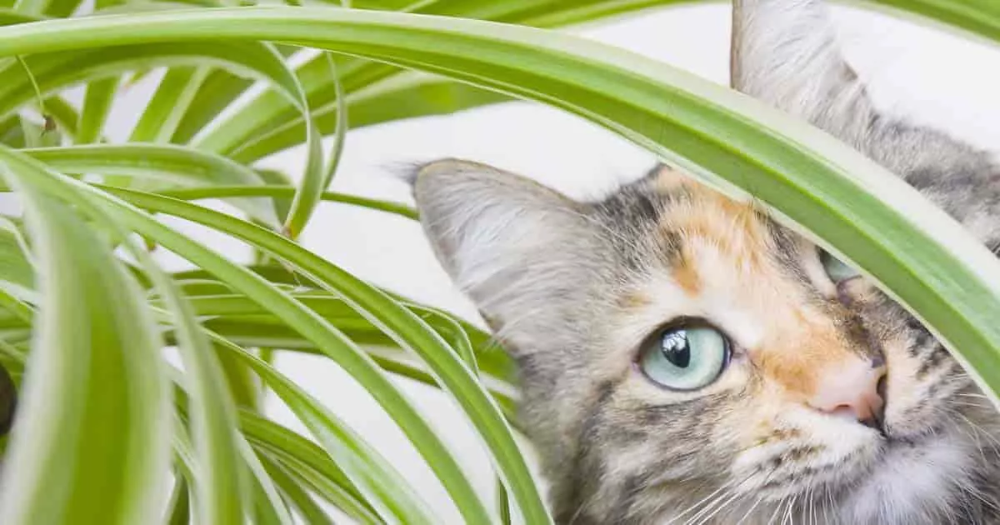 20 Toxic And Poisonous Plants For Cats Cat Friendly Plants Cat Plants Toxic Plants For Cats