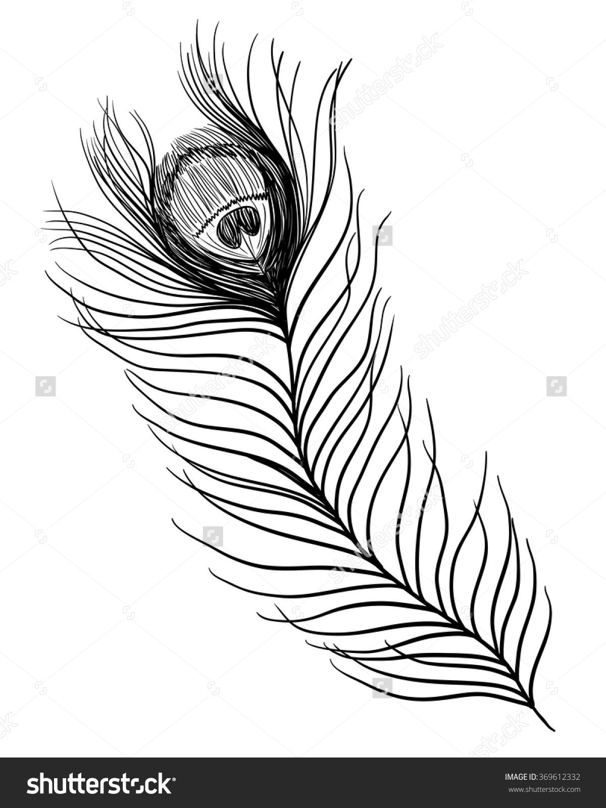 Peacock Feather Vector Black And White Illustration Tattoo Black And White Illustration Black And White Feather Vector