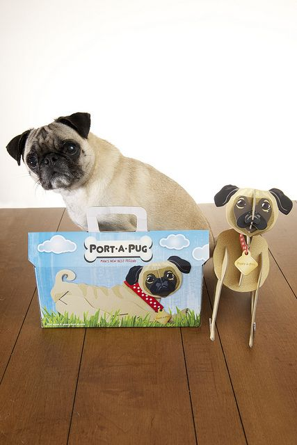 port-a-pug = maybe this is for you, @Taylor Barstow