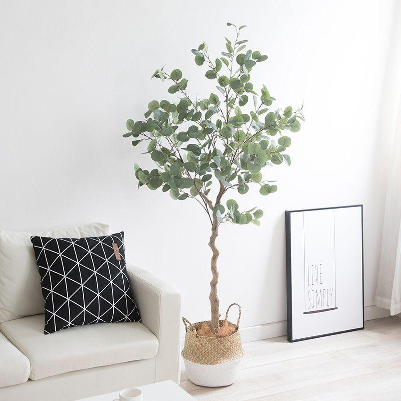 eucalyptus foliage plant House plants decor, Eucalyptus
