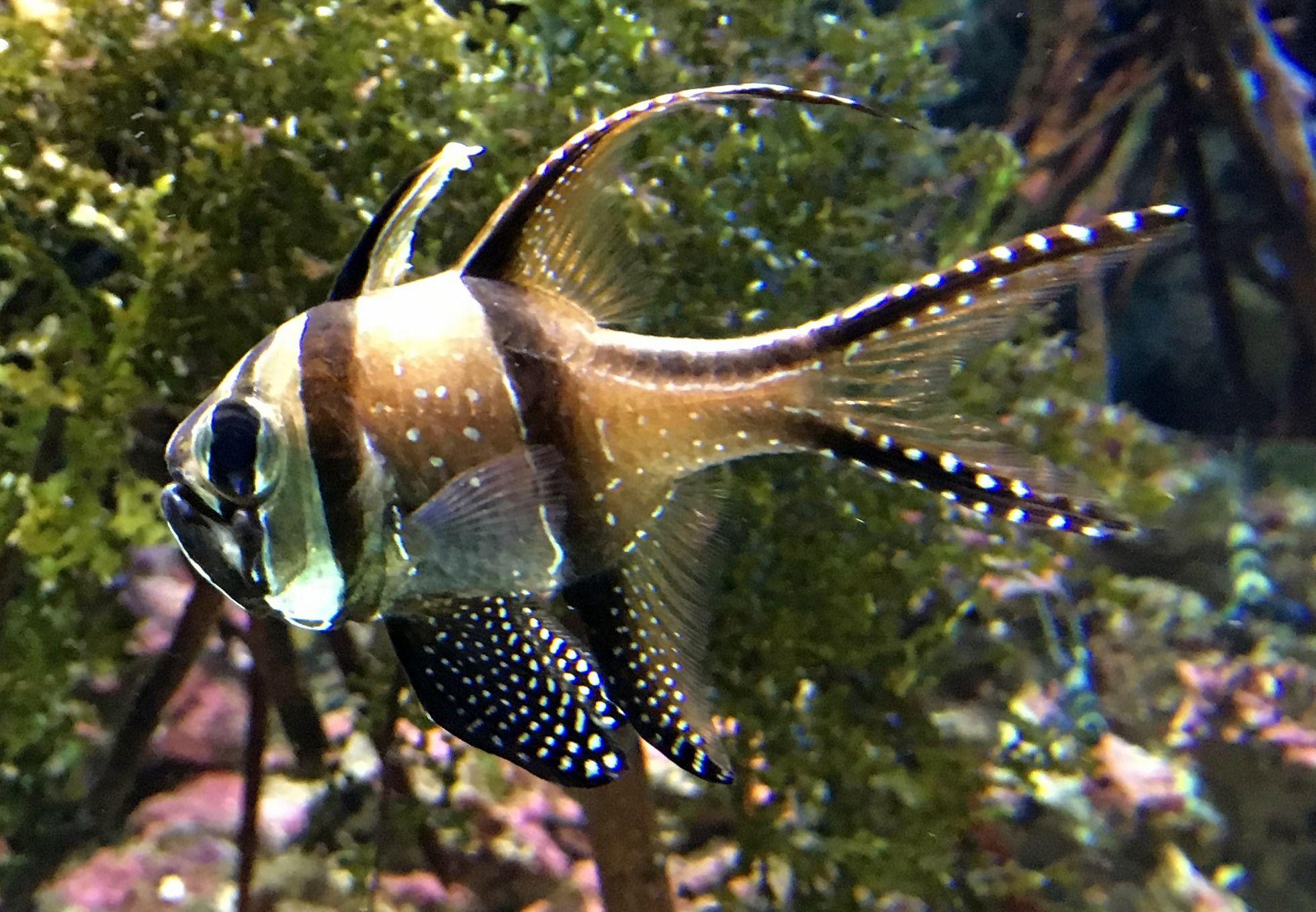 Birch Aquarium, La Jolla, CA Birch aquarium, Fish pet, Pets