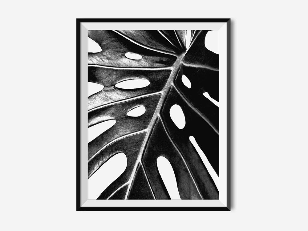 Modern monochrome tropical leaf banana leaf oversized black white print
