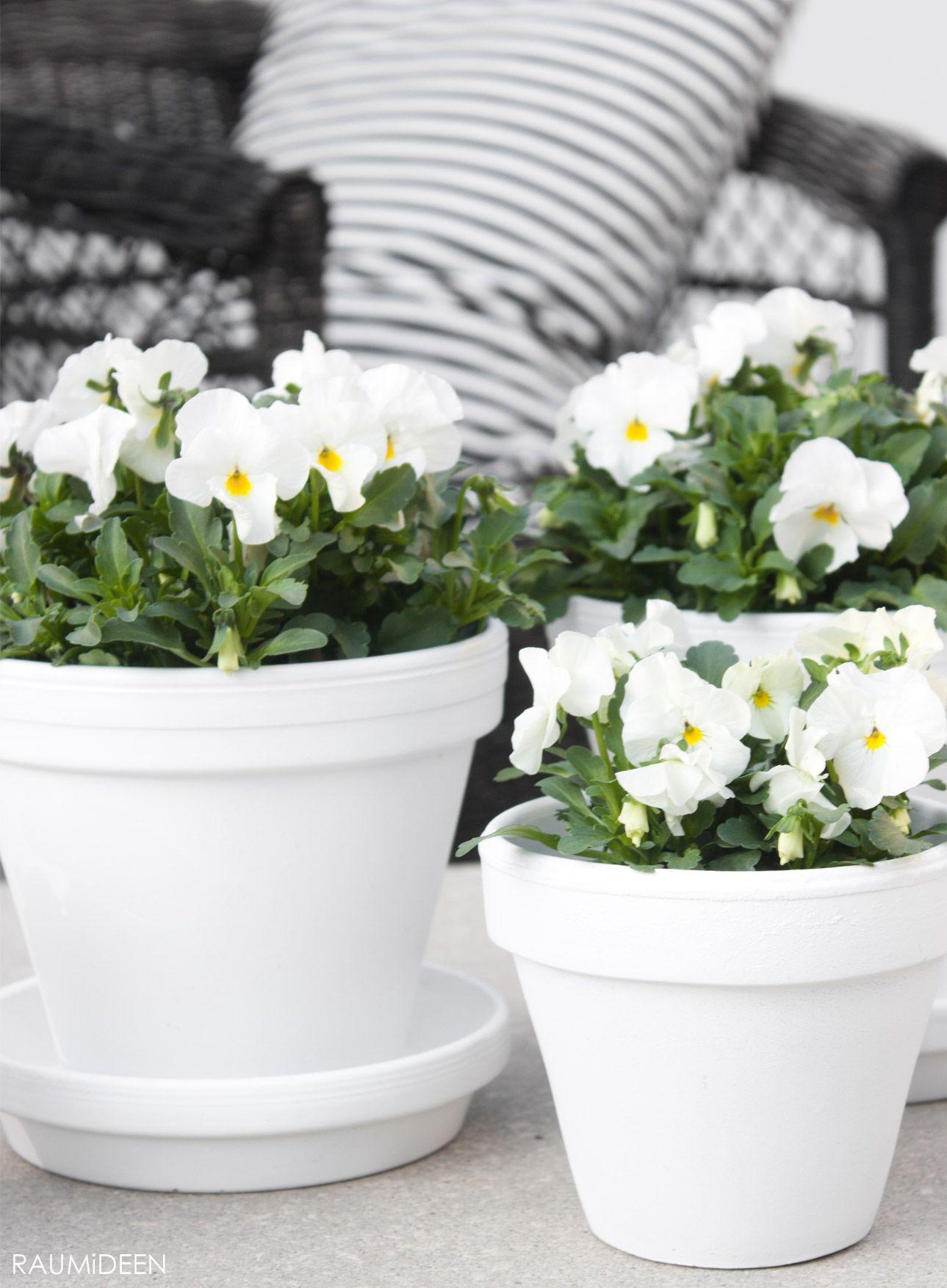 Tontoepfe Hornveilchen Blumendeko Blumendekoration