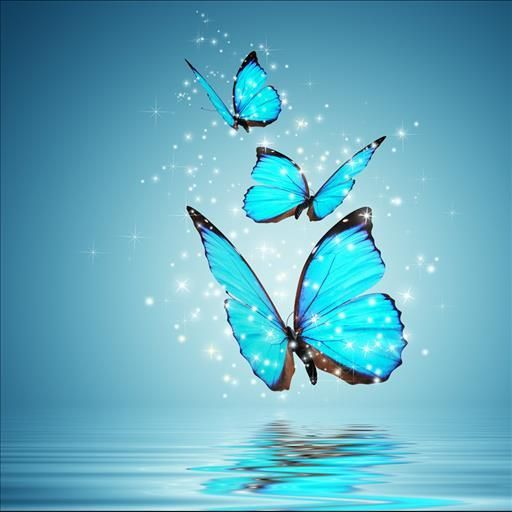 Top 14 Most Beautiful Butterflies In The World [Amazing