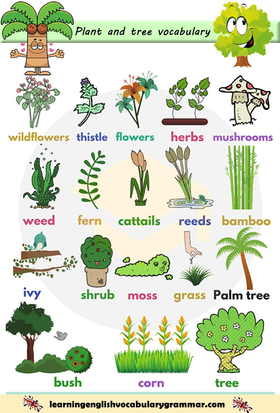 Trees Plants And Flowers Vocabulary List With Pictures Como Aprender Ingles Basico Vocabulario En Ingles Material Escolar En Ingles