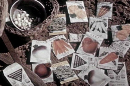 1940s Garden  Home Gardening Films DVD: Classic Horticulture  Plant Growth Videos w/ Flower, Vegetable, Herbs, Soil  Seed Tips $10,99
