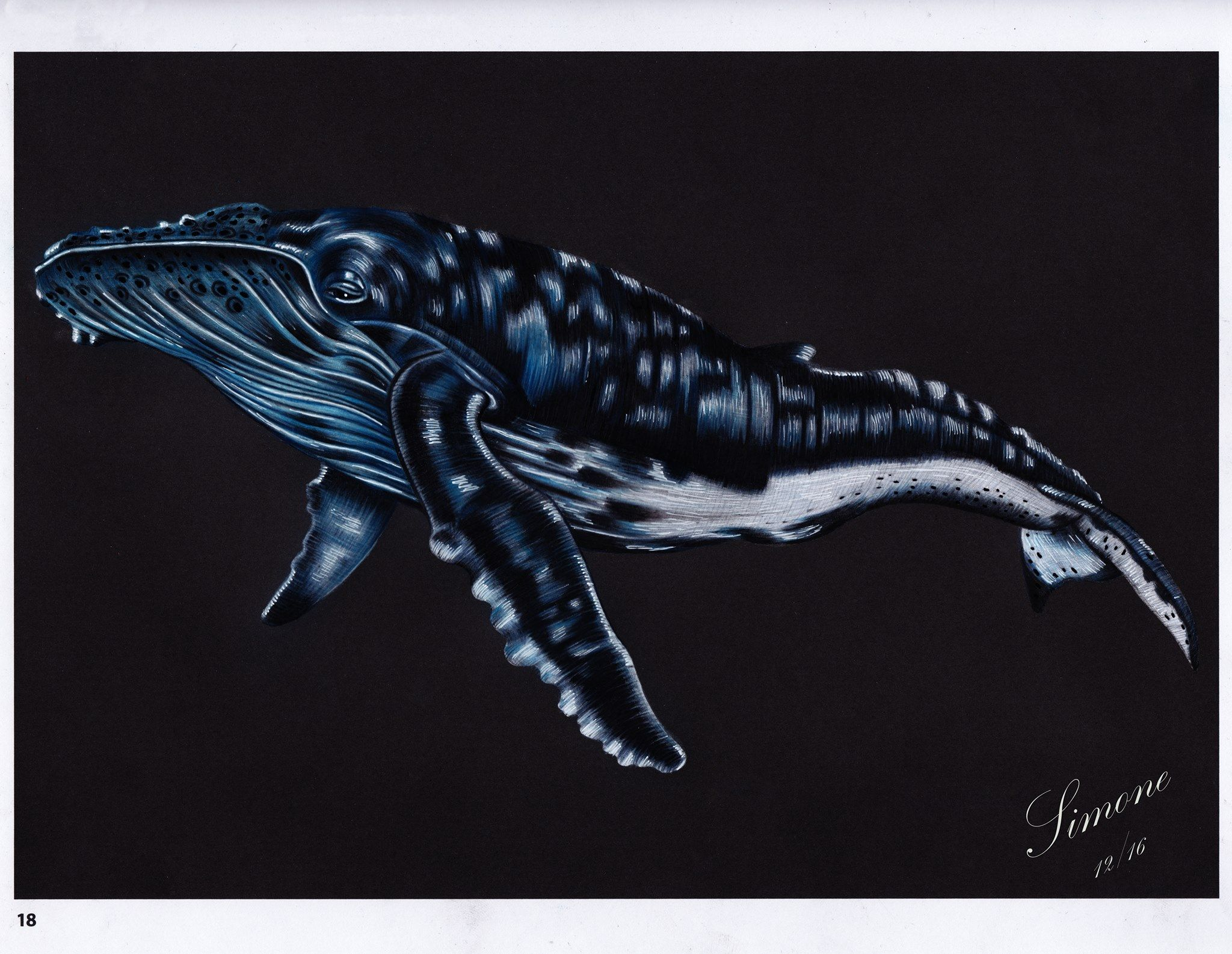 Humpback Whale By Si Mone