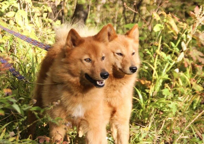 95 Finnish Names For Dogs Dog Names Cool Pet Names Dogs