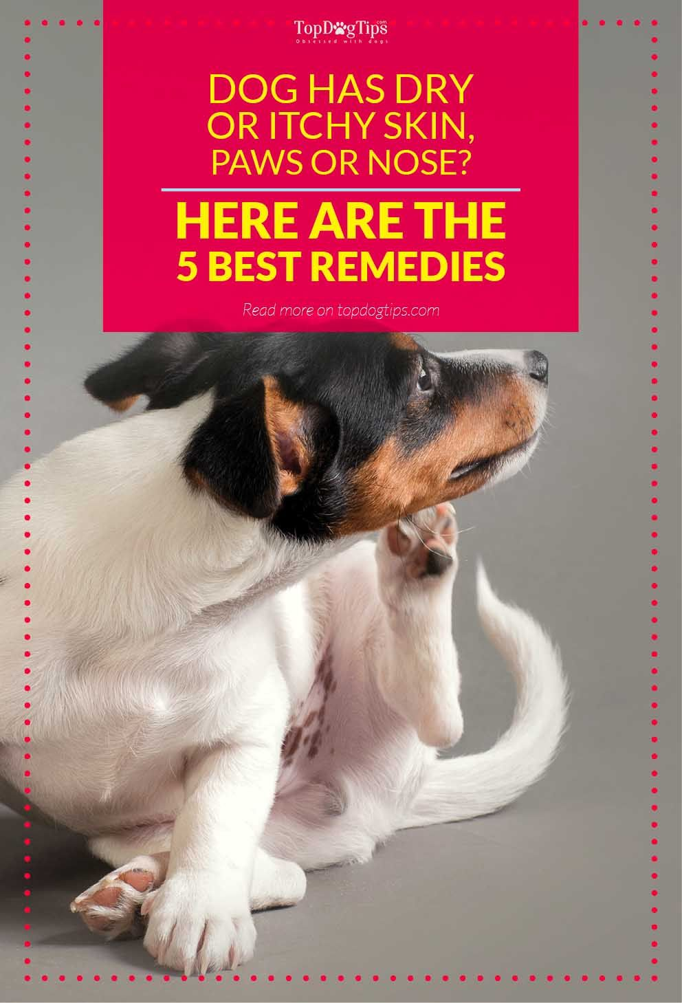 5 best remedies for dog's dry or itchy skin, paws and nose | best