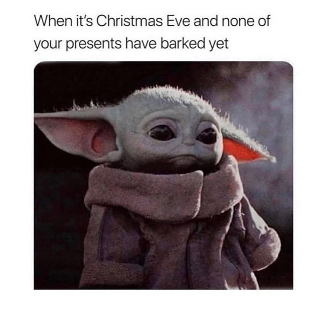 Baby Yoda Dog Really Funny Memes Funny Relatable Memes Stupid Funny Memes
