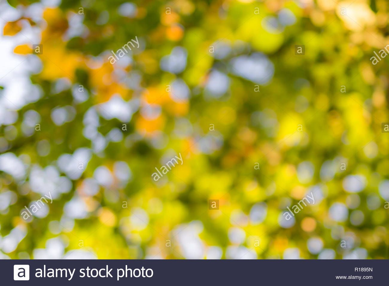 Download This Stock Image Natural Green Blur Background In Sunlight Abstract Round Bokeh From Green L Blurred Background Picsart Background Photo Backgrounds