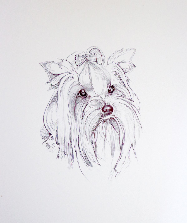 yorkie watercolor painting google search yorkie arterror