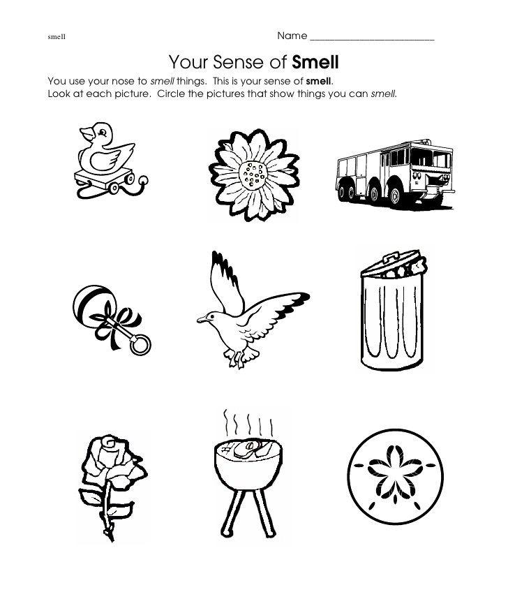 Smell Worksheet El Cuerpo Y Los Sentidos Pinterest Worksheets