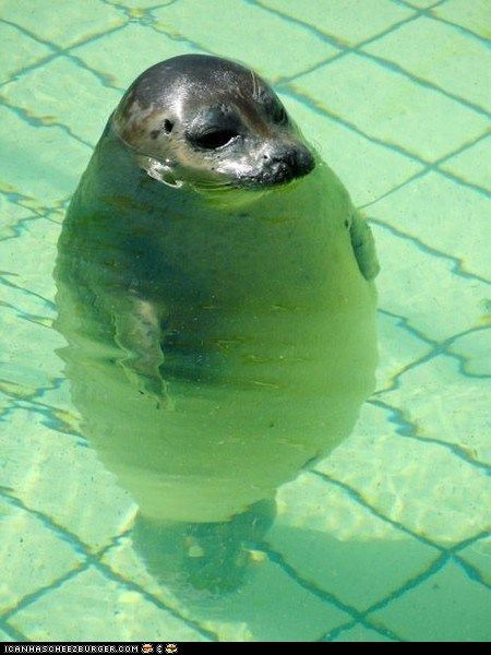 This is what I feel like at the pool.