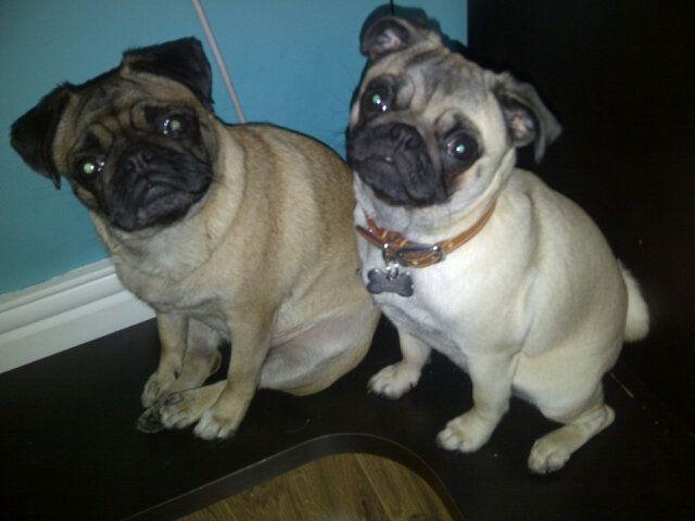 Meg & Bella <3