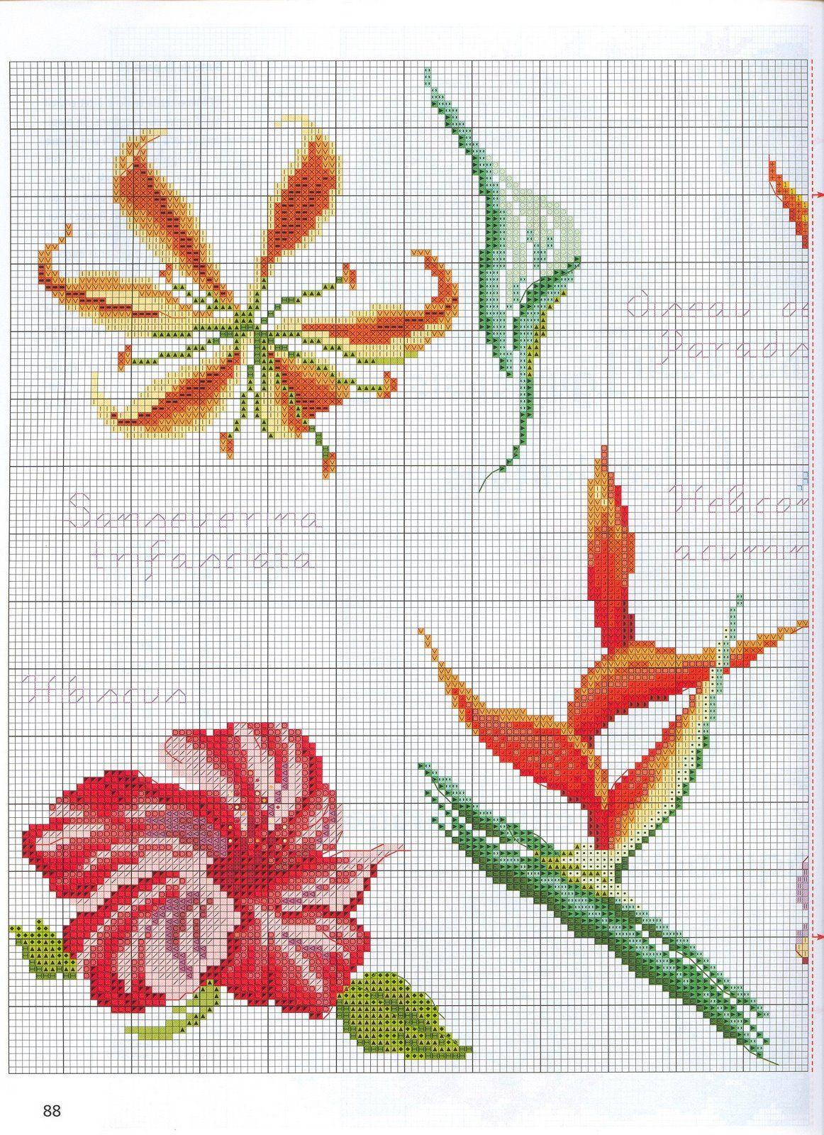 Flores de paraiso 2