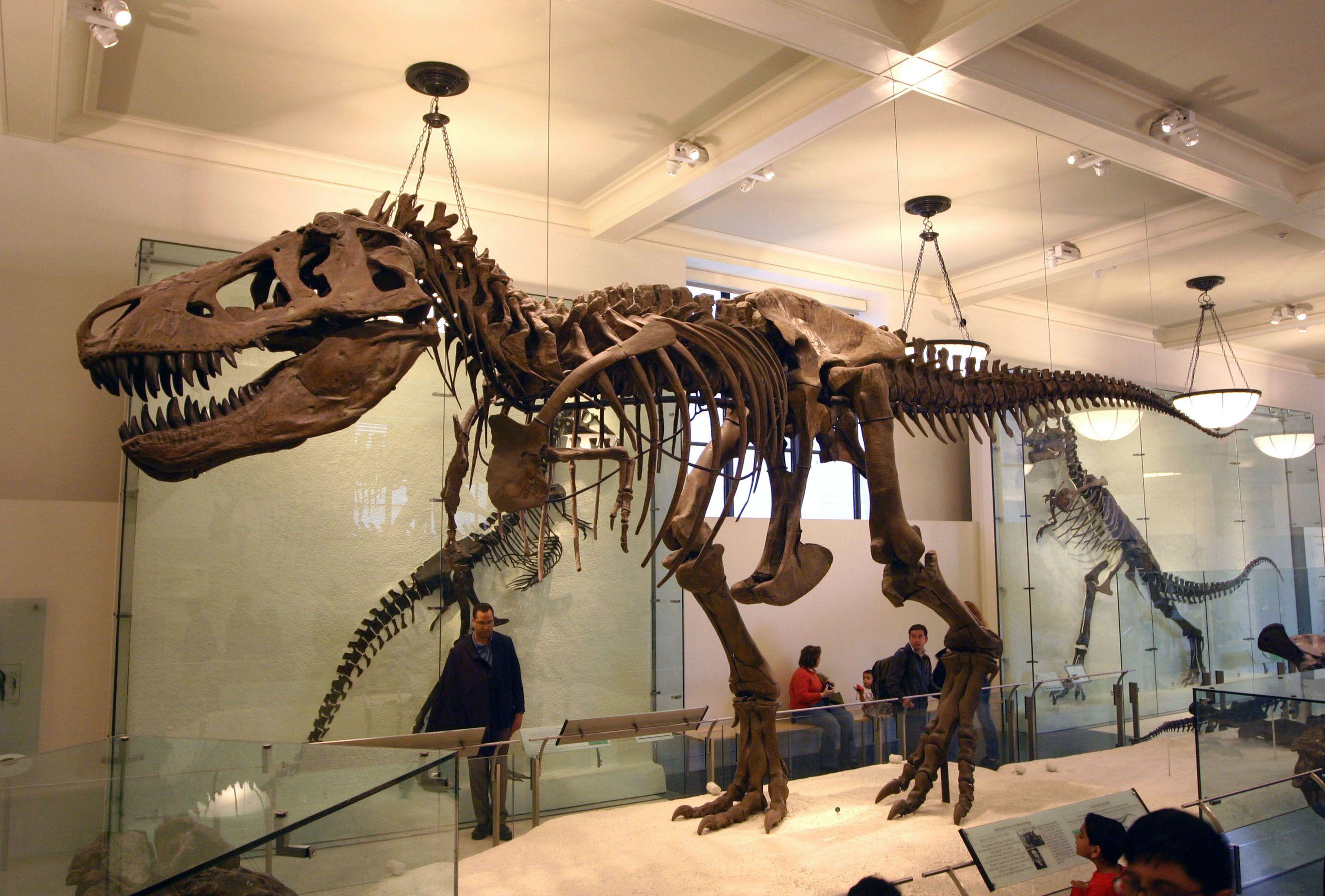 Trex skeleton Dinosaur, Tyrannosaurus, Prehistoric animals