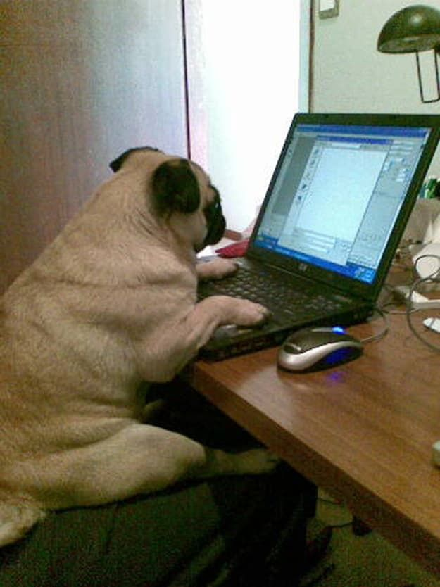 23 Perks Of Working From Home Working From Home Meme Pugs