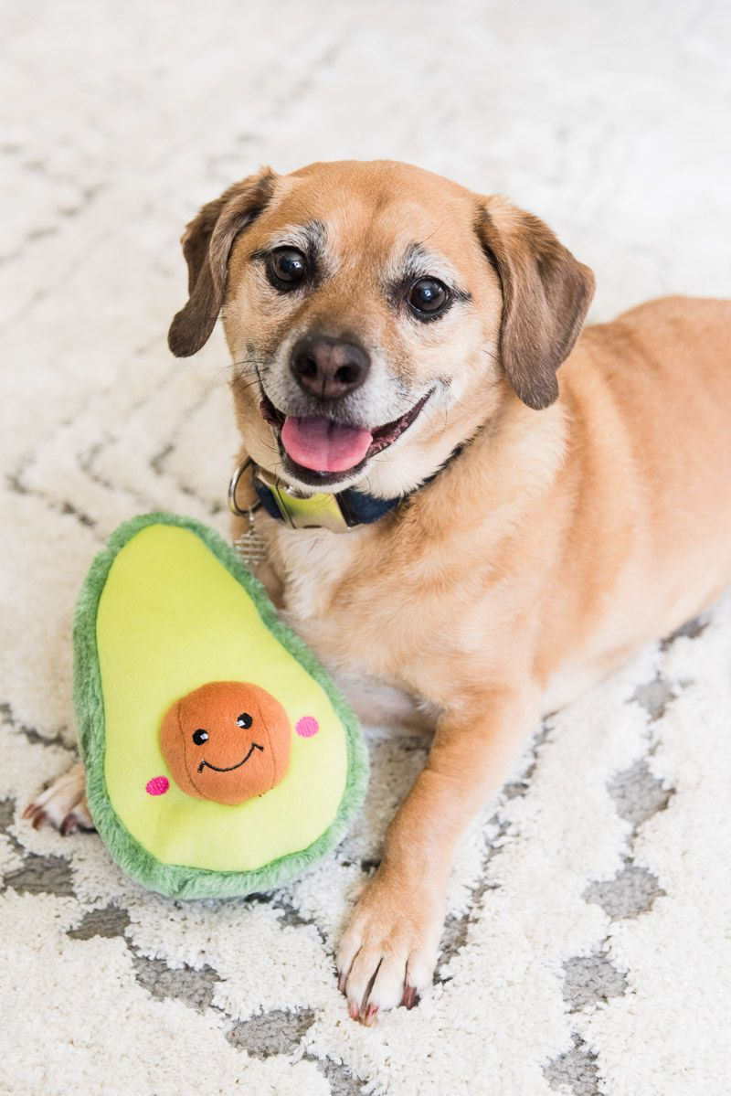 Moving Towards A Plant Based Diet With Hellofresh Best Dog Toys