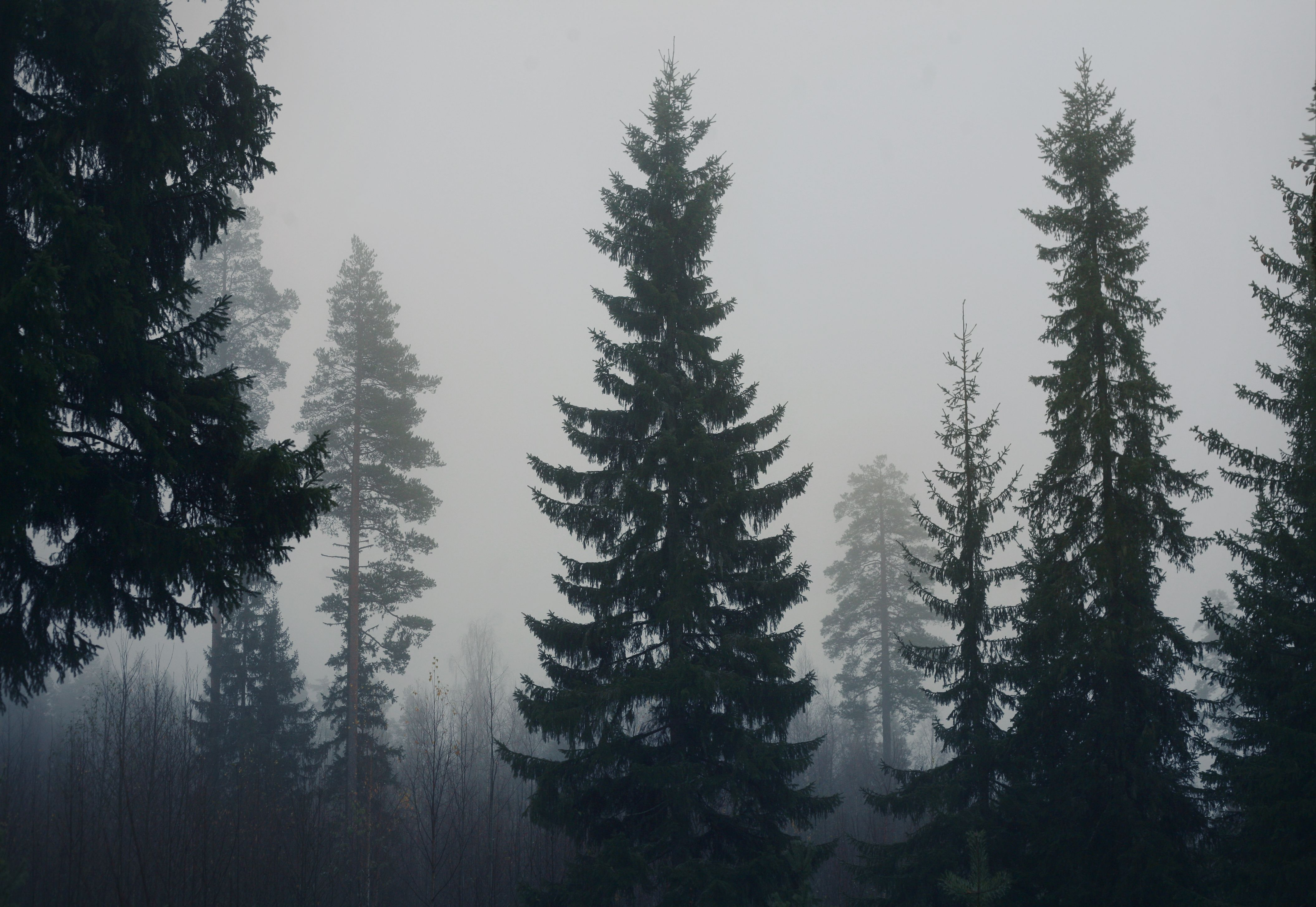 680715852955efd7a3c8ojpg 42242152912 dark forest dark