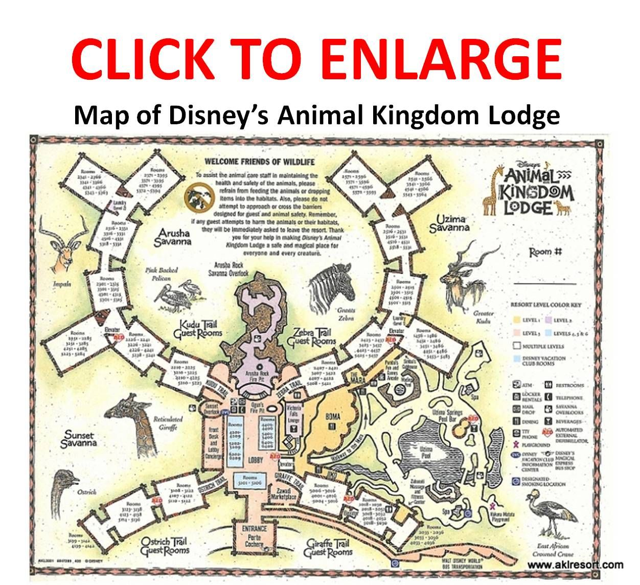 Review Disney S Animal Kingdom Lodge Jambo House