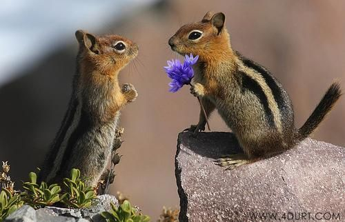 15 Animals That Love Flowers
