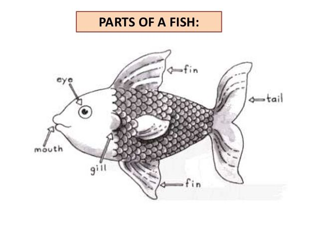parts-of-the-fish-3-638.jpg (638×479)