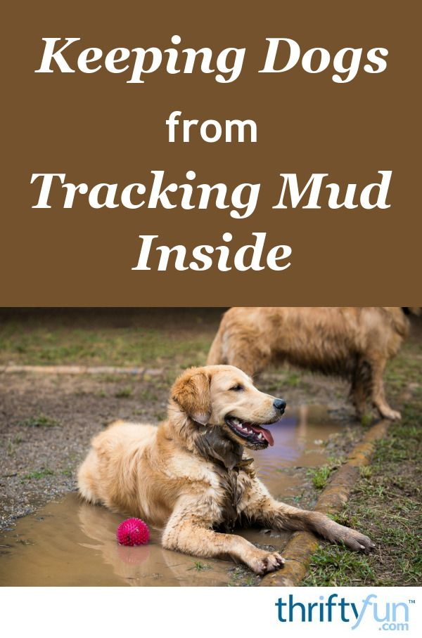 Keeping Dogs From Tracking Mud Inside Dogs Dog Yard Mud