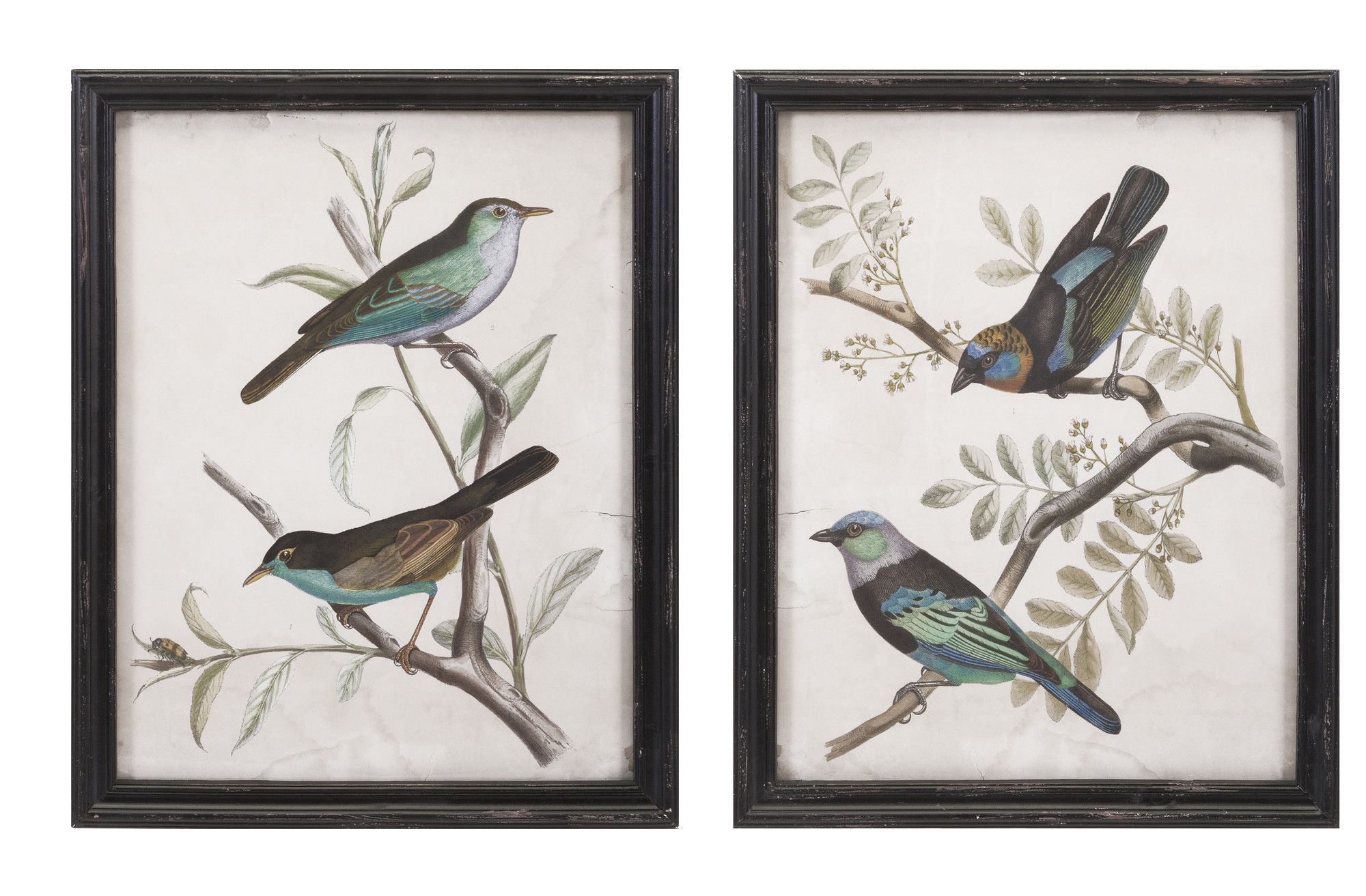 Bird Framed Print | Products | Pinterest | Products