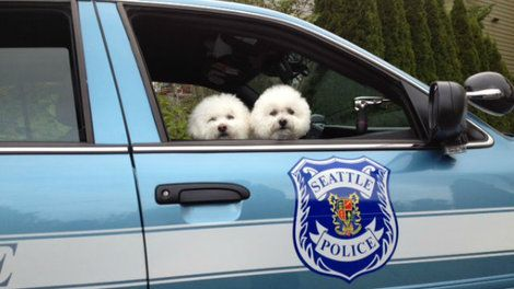 Seattle Police Department represents for 'Bring Your Dog to
