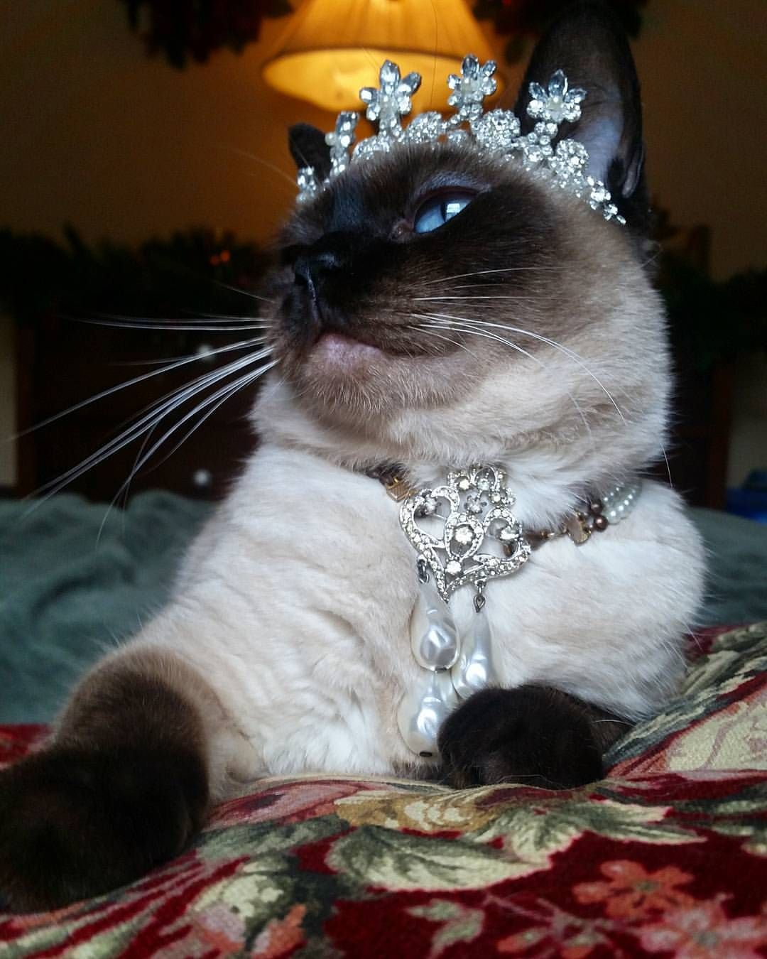 Her Royal Highness strikes a dramatic pose to better show off the impressive pendent that belongs to the Queen Alleria Pearl Parure. #HappyHolidays #ChristmasAtCatsfordia #KittiesOfCatsfordia...