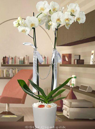 Orkide Çiçek : 2 Kök   sevdiklerinizin bir gülüşü, sizi çok ama çok mutlu ediyorsa Seramik vazo da süslenmiş 2 kök orkide Rüya Güzeli çiçek aranjmanı,   sevgi dolu orkide ile on a çok özel bir sürpriz yapın. orkide gönderin mutlu edin. http://www.starcicekcilik.net/