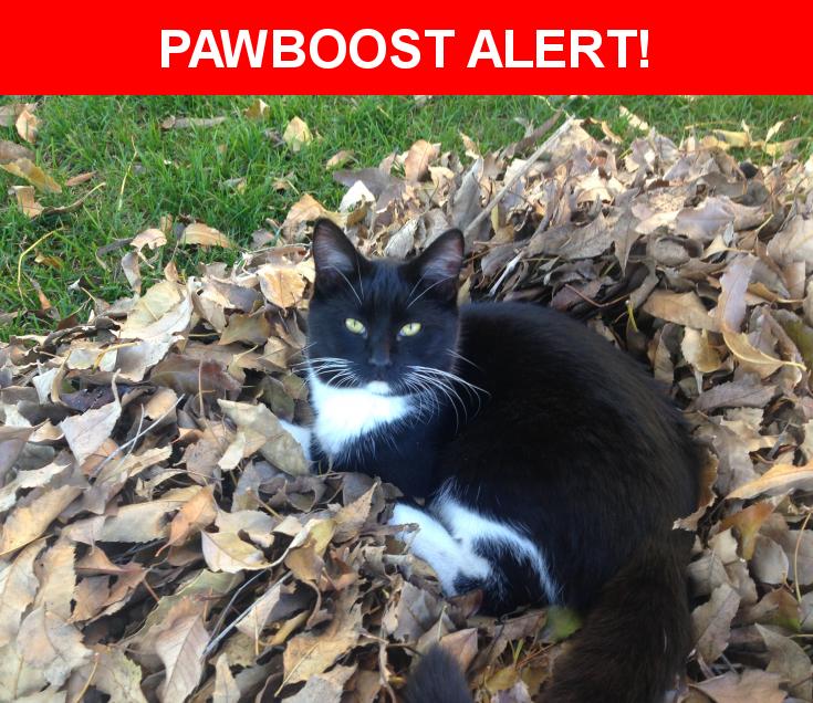 Please spread the word! Panda was last seen in Mission Hills, CA 91345.    Nearest Address: Near Saloma Avenue, CA, United States
