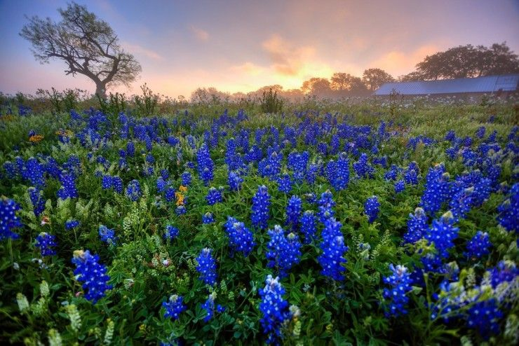 Top Spring-Texas-Photo by Langford Photography