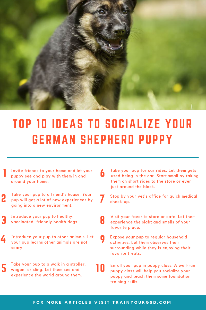 Top 10 Ideas To Socialize Your German Shepherd Puppy German Shepherd Puppies German Shepherd Puppies Training Shepherd Puppies