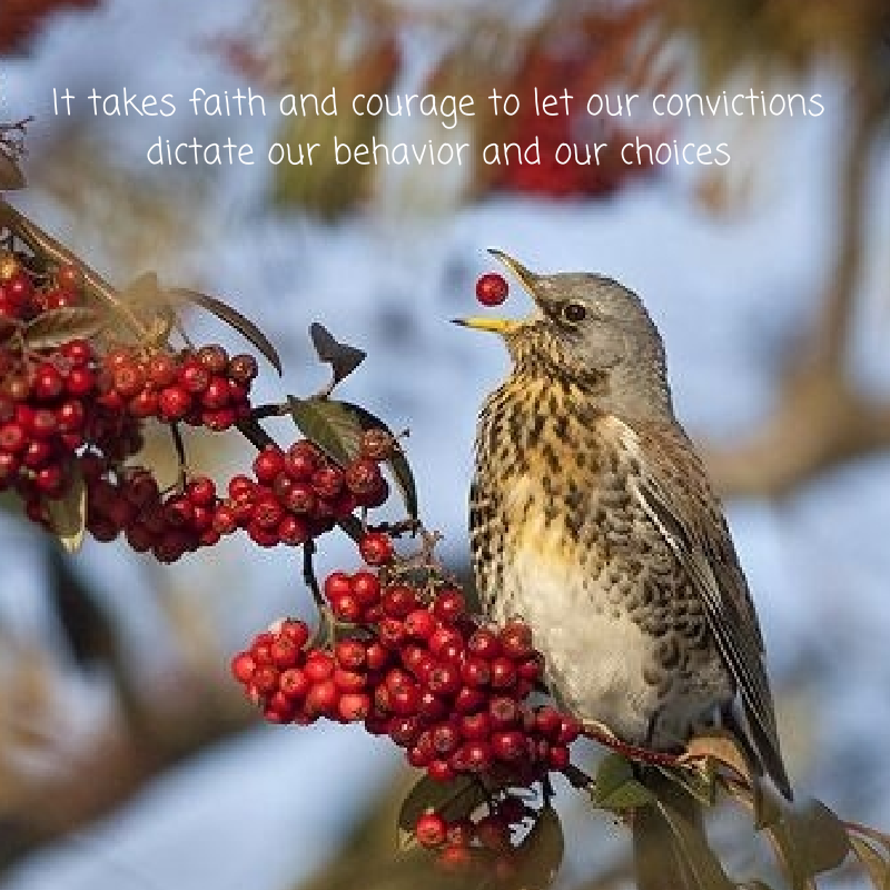 It Takes Faith And Courage To Let Our Convictions Dictate Our Behaviour And Choices Pretty Birds Pet Birds Beautiful Birds