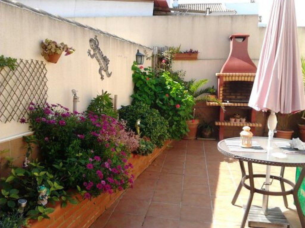 Las mejores plantas para zonas calurosas plantas red for Plantas resistentes al sol para terrazas
