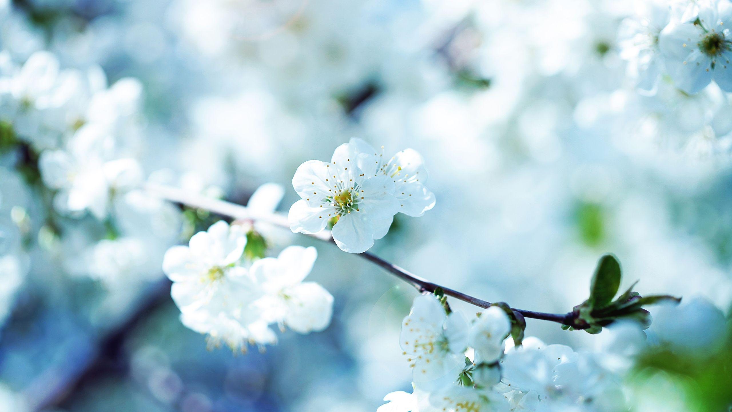 For You Grandma Zanie Death Beyond Pinterest Flower