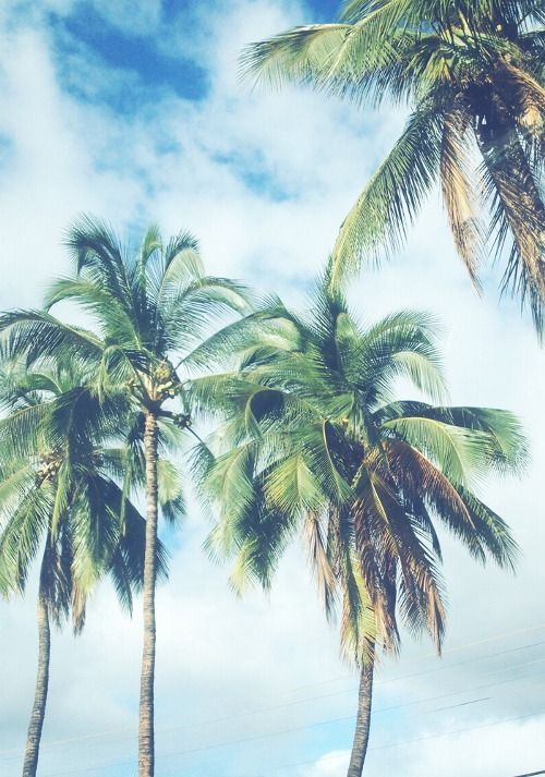 palm trees, look up
