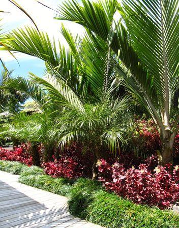 Layered sub tropical palm garden. Seed Landscapes Garden Photos of ...