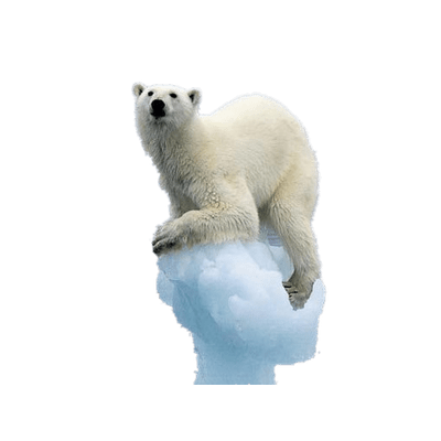 Polar Bear On Melting Iceberg Polar Bear Bear Png Images
