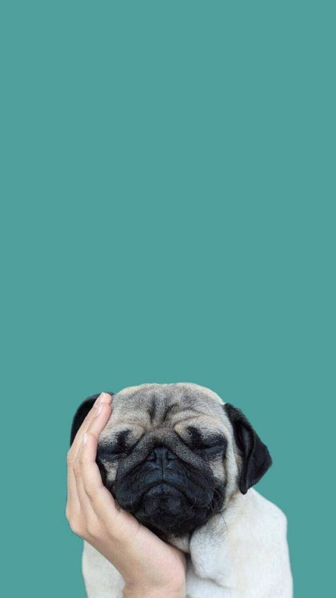 PUG Happy Cute Dog Smiling Puppy iphone case