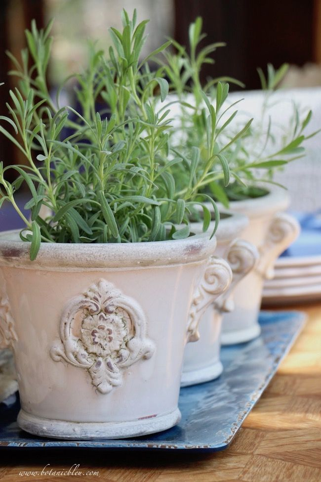 Photo of french country design lavender plants