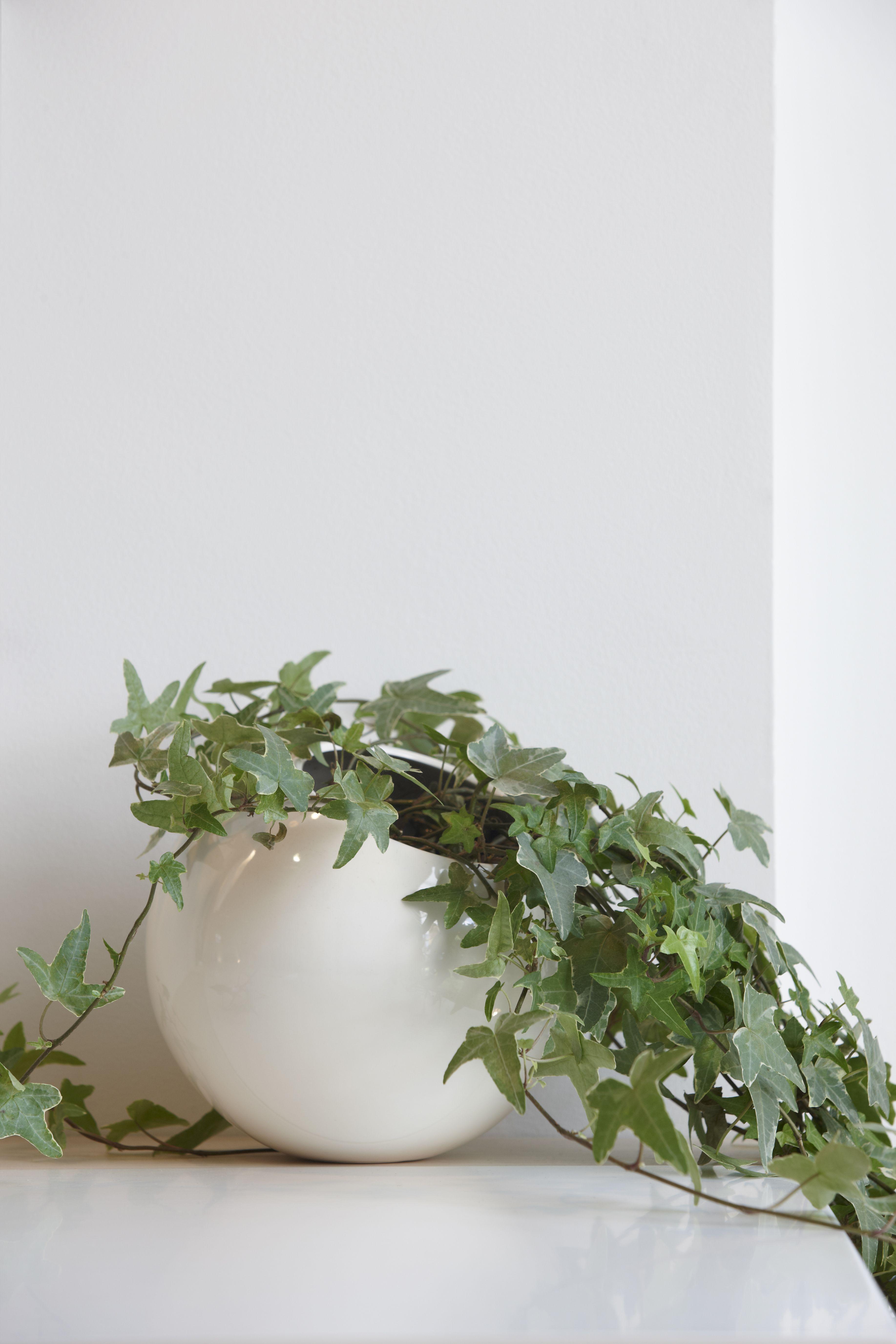 Vigne lierre en pot : 10 plantes d\'intérieur à suspendre - Journal ...