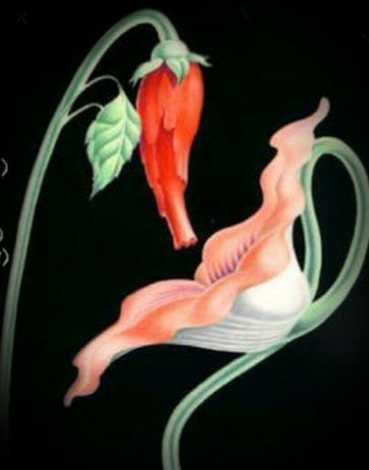 Flowers Pink Floyd Tatoo Tattoo Inspiration Pinterest Pink